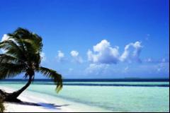 Cocotier et plage.png