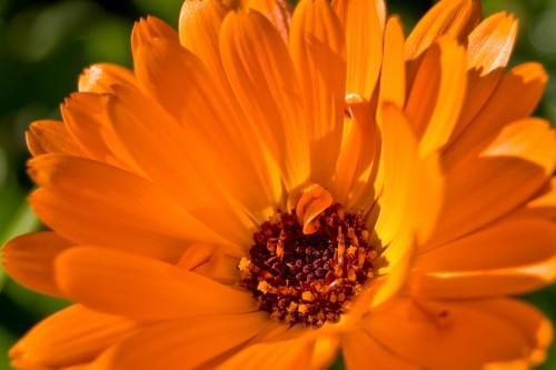 fleursl2.jpg